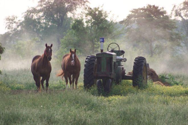 horses&tractor
